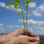 Urge una Cultura del Medio Ambiente