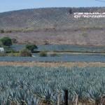 Tequila, primera ciudad inteligente