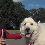 Nombran a perro alcalde en Minnesota, EU