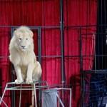 Coahuila,  décimo estado en prohibir circos con animales