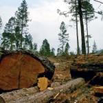 México reprueba en competitividad forestal