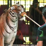 Profepa multa a circo por maltrato animal