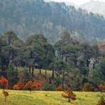 Desarrollo con visión sustentable