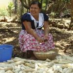 Llama CIDH respetar derechos y territorios indígenas en América