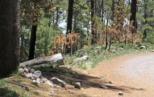 camino Toluca