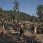 Denuncian daños a bosque para proyecto carretero
