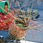 Opciones productivas para comunidades indígenas