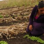 Mujeres del medio rural representan el 15.4% de la PEA