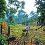 Pequeños productores forman cadenas de valor
