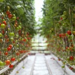 Impulsarán proyectos productivos agrícolas de jóvenes