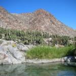 Un oasis en el desierto
