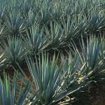 Evitarán ilegalidad en industria del Tequila, asegura Videgaray