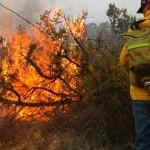 Combate a incendios forestales garantizado pese a recorte: Semarnat