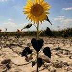 Municipios establecerán convenios para combatir Cambio Climático