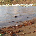 Playas en Guerrero y Campeche no aptas para bañistas