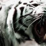 Alcalde en Puebla tenía 29 especies de animales en su rancho