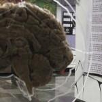 Presentan exposición Banco Nacional de Cerebros en el Metro