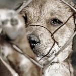 El maltrato animal en México y los estados que lo sancionan