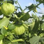 Buscan rescatar pozos agrícolas con tecnología desalinizadora
