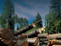Bosques mexicanos: cómo aprovechar sin talar de más
