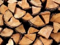 Crean 'Madera Líquida', una alternativa contra la deforestación