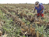 Solo el 1.5% de financiamiento nacional va al sector rural