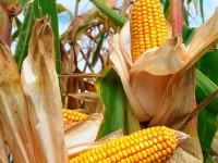 En México 4 de cada 10 hectáreas productivas son para alimentos