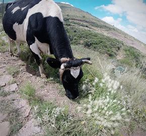 ganado-zacatecas-suelos01