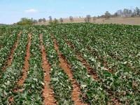 Obtienen biogás a partir de paja de frijol en Zacatecas