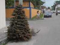 Intercambia tu árbol de Navidad por plantas de ornato en la CDMX