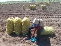 Dictan 22 mil medidas de seguridad a campos agrícolas en 7 años