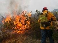 México ha perdido más de 3 millones de hectáreas de bosque por incendios