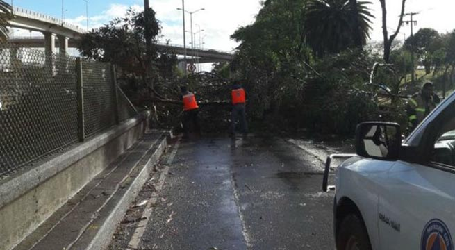 Fuertes_vientos_afectan_al_menos_cuatro_entidades_Alcaldes_de_Mexico_Marzo_2016