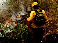 El mayor número de incendios forestales se concentran en 5 entidades