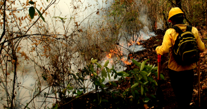 Mayor_número_Incendios_forestales_en_5_estados_Alcaldes_de_Mexico_Mayo_2016