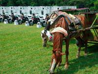Sustituyen a caballos recolectores de basura por motocarros en Xalapa