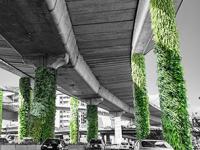 Inauguran primeros jardines verticales en el Periférico de la CDMX