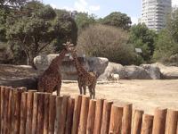 Zoológicos de la CDMX serán sitios de conservación más que de exhibición: SMA