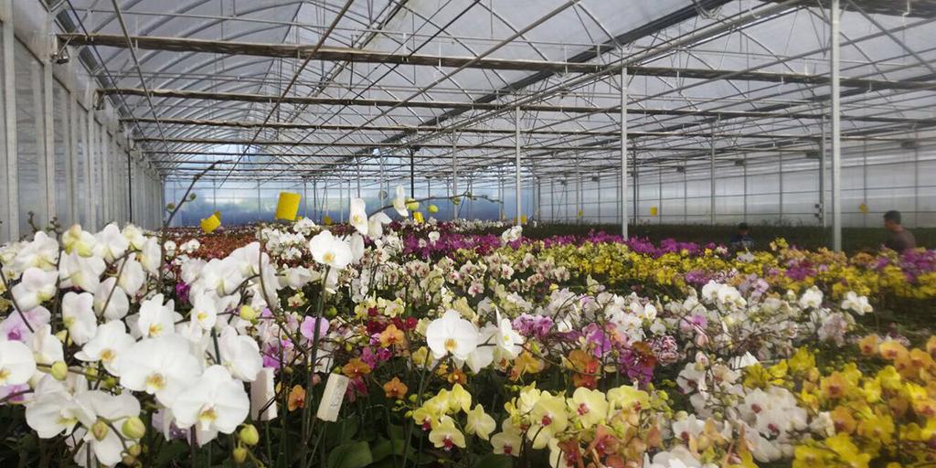flores-campo