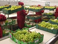 Nuevas reglas de inocuidad alimentaria en EU