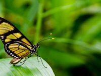Semarnat dará reconocimiento por preservación y restauración de la naturaleza