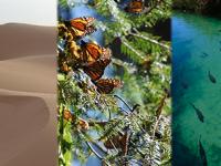 Preparan Congreso Internacional de Áreas Naturales Protegidas en la CDMX