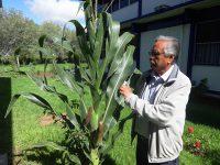 Generan maíz tolerante a sequías en Zacatecas