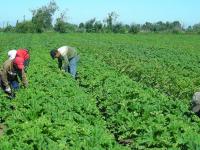 El censo agropecuario 2017 en riesgo por recorte presupuestal: Inegi