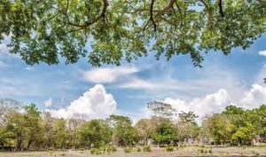 municipios-biodiversos