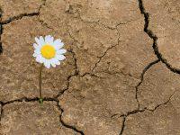 Resiliencia en México: ¿qué hacer en el tema medioambiental?