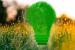 Energía sustentable con participación colectiva en Yucatán