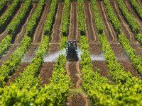 Créditos agropecuarios crecen en los estados