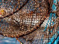 Gestión de recursos marinos: ejemplos de éxito en Punta Allen, Quintana Roo
