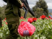 Así se reparten el territorio los cárteles de la droga mexicanos